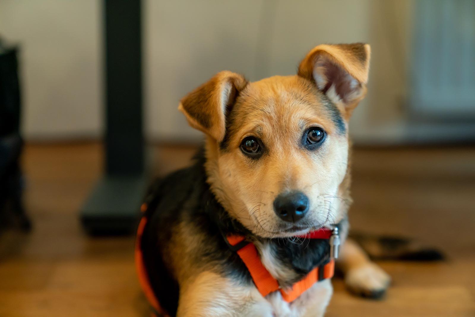 Foto van Abby onze kantoorhond